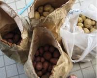 '12.6.12ジャガイモ収穫.jpg