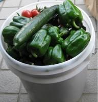 '12.6.12野菜収穫�@.jpg