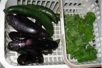 '12.7・8野菜収穫�A.jpg