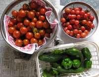 '12.7.18野菜収穫.jpg
