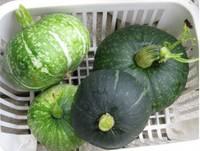 '12.7.2野菜収穫�A.jpg