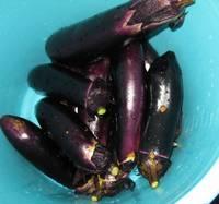 '12.7.2野菜収穫�D.jpg