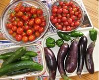 '12.7.23野菜収穫.jpg