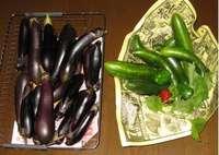 '12.8.9収穫野菜�@.jpg