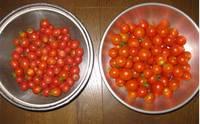 '12.8.9収穫野菜�A.jpg