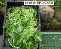 '14.10.26間引きカブ菜.jpg
