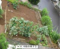 '14.6.19畑の様子�A.jpg
