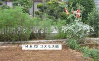 '14.6.23畑の様子�@.jpg