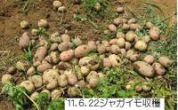 ジャガイモ収穫�@.jpg