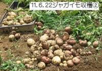 ジャガイモ収穫�A.jpg