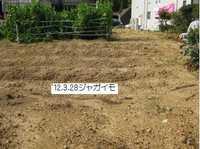 今日の畑�A.jpg