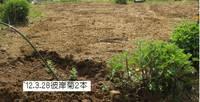 今日の畑�C.jpg