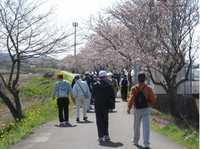 大村市福重郡川沿いの桜並木.jpg