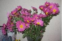 菊の花�D.jpg