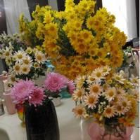菊の花11/12.jpg