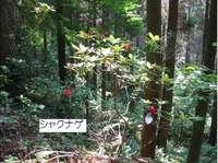 野岳湖自然公園�E.jpg