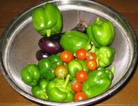 野菜収穫'11.9.17.JPG