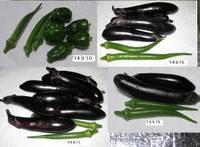野菜収穫'14.9.10〜9.15.jpg