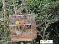 高峰展望台(湯野尾町)ウォーキング�B.jpg