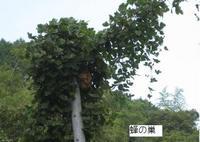 高峰展望台(湯野尾町)ウォーキング�C.jpg